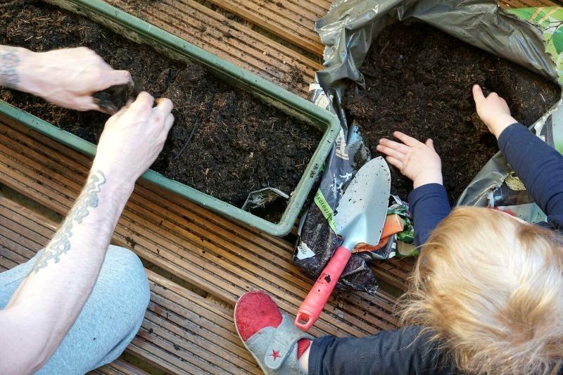 Die Stadtgärtner Samenbomben - City Gardening für Weltverbesserer und Stadtpiraten