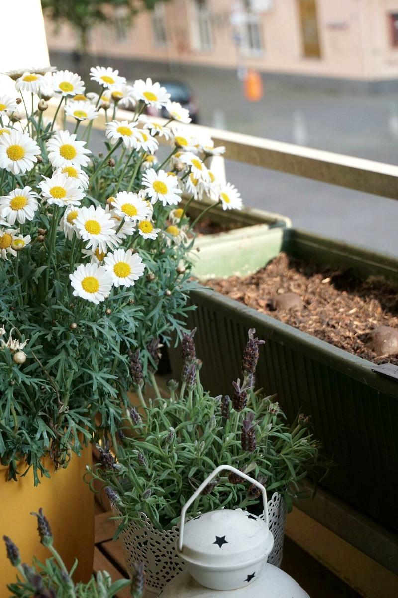 Seedbombs von den Stadtgärtnern - City Gardening für Weltverbesserer und Stadtpiraten